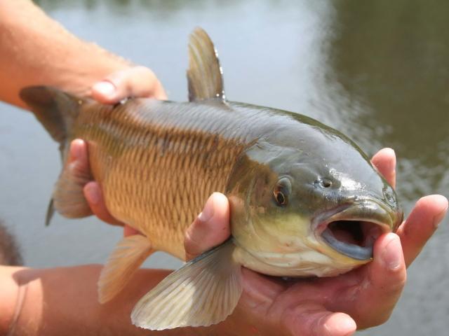 прогноз клева рыбы в барнауле