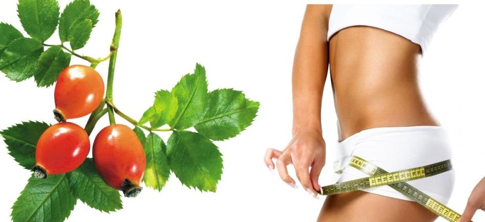 Как похудеть с помощью шиповника с сорбитом отзывы