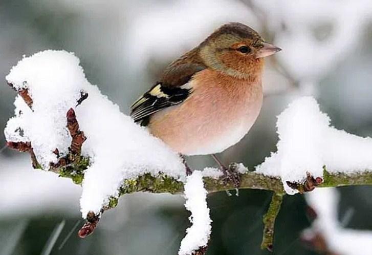 Прилетают тогда, когда еще снег лежит
