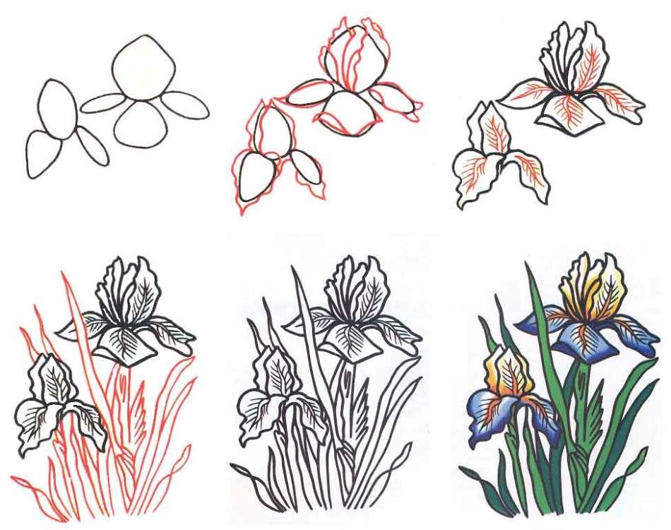 Как нарисовать цветок ирис карандашом и акварелью поэтапно для начинающих? Как нарисовать букет цветов ирисов карандашом?