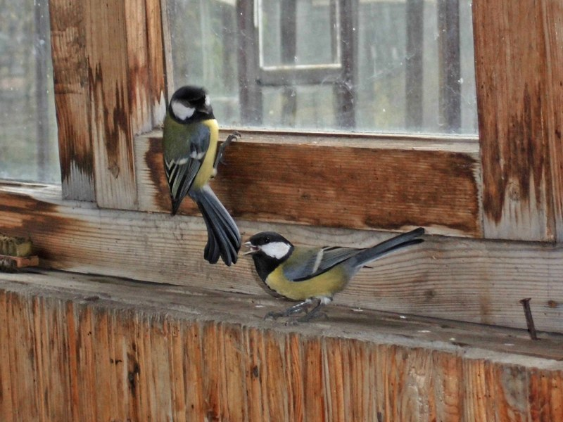Примета: птица ударилась в окно дома и улетела. к чему птица.