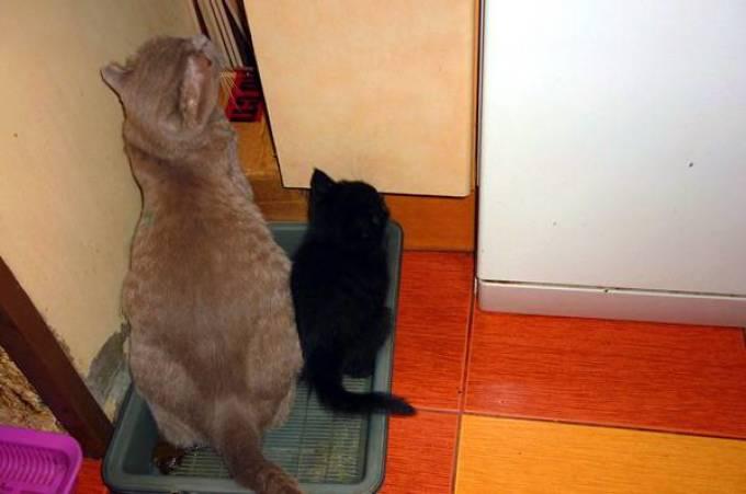 Как сделать чтобы кошки ходили в один  171