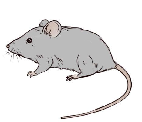 мышка рисунок для детей картинки