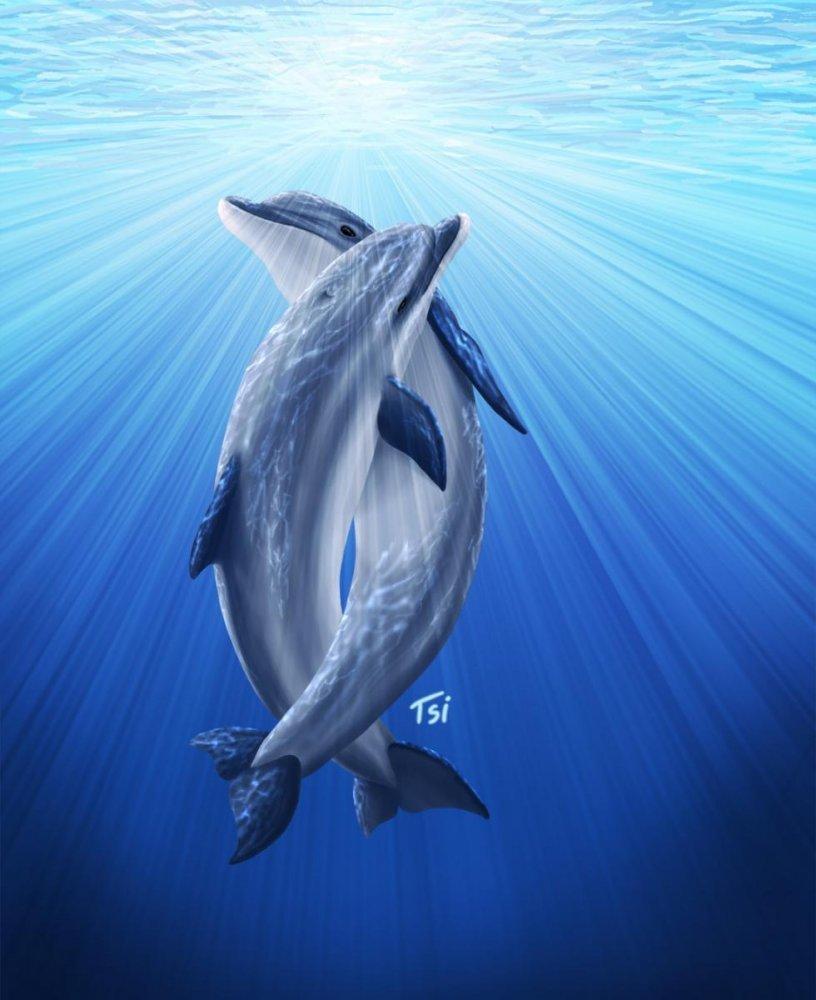 Дельфины картинки на полу