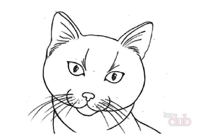 Круг на голове кота