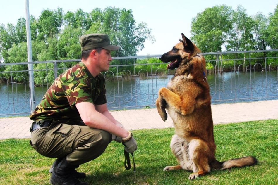 С какого возраста можно дрессировать щенка собаки в домашних условиях?