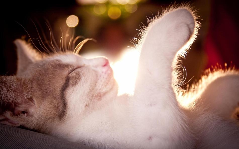 К чему снится носить кота на руках