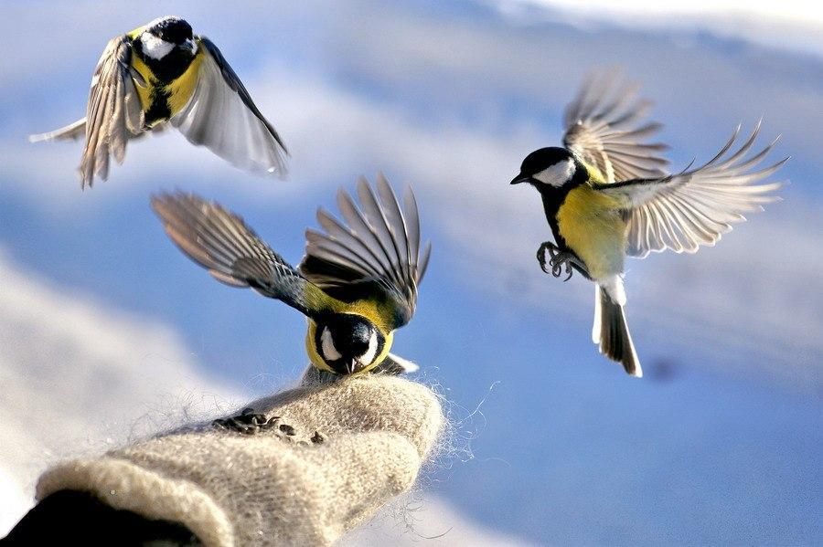 Чем лучше не кормить птиц зимой?