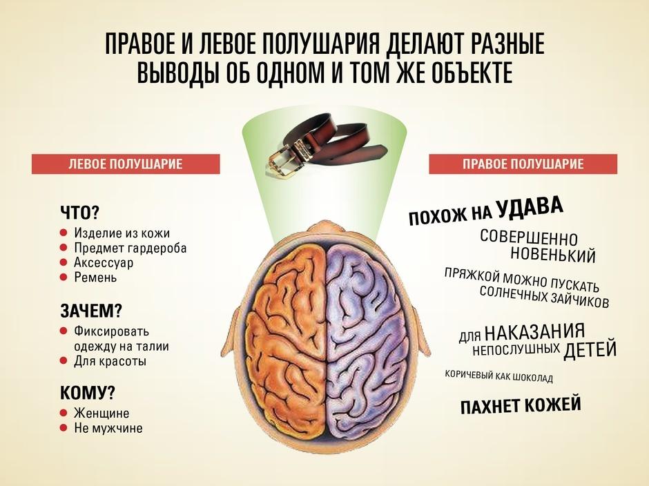 Как взаимодействуют левое и правое полушарие мозга