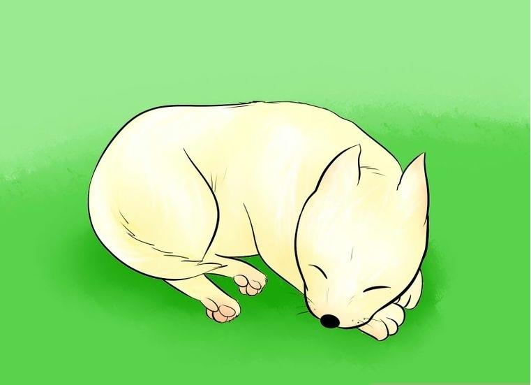 Как нарисовать спящую собаку