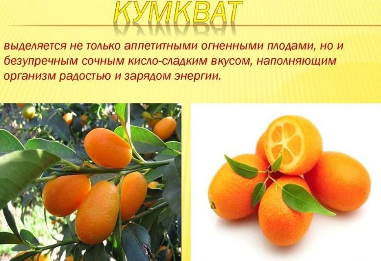 Яркий фрукт