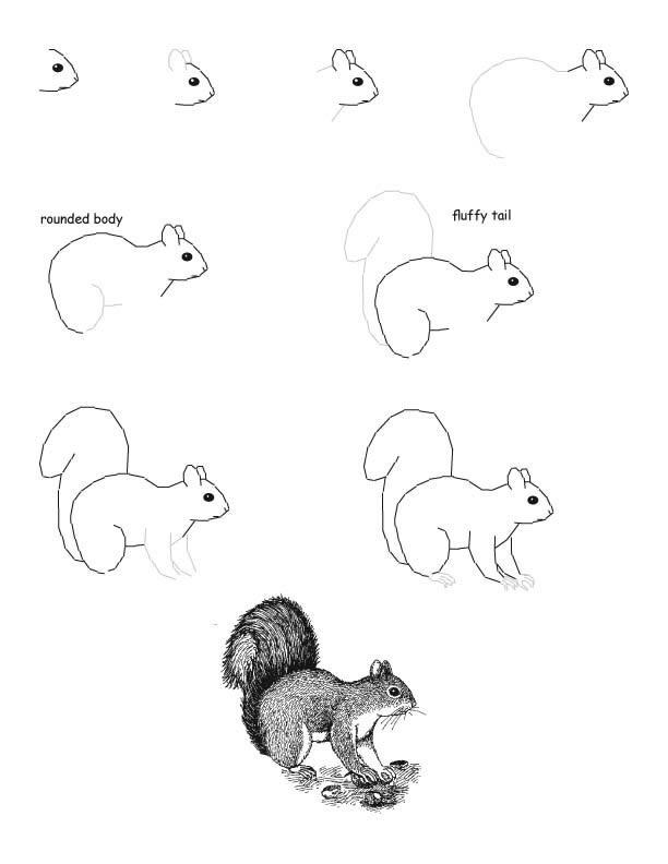 Картинки для срисовки белочка