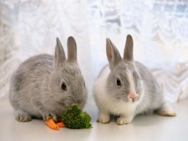 Искусственное кормление новорождённых крольчат. Кролики 38