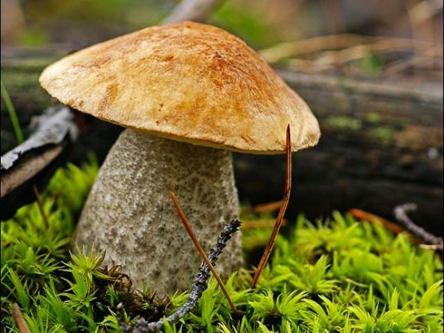 сколько варить грибы для супа свежие подберезовики