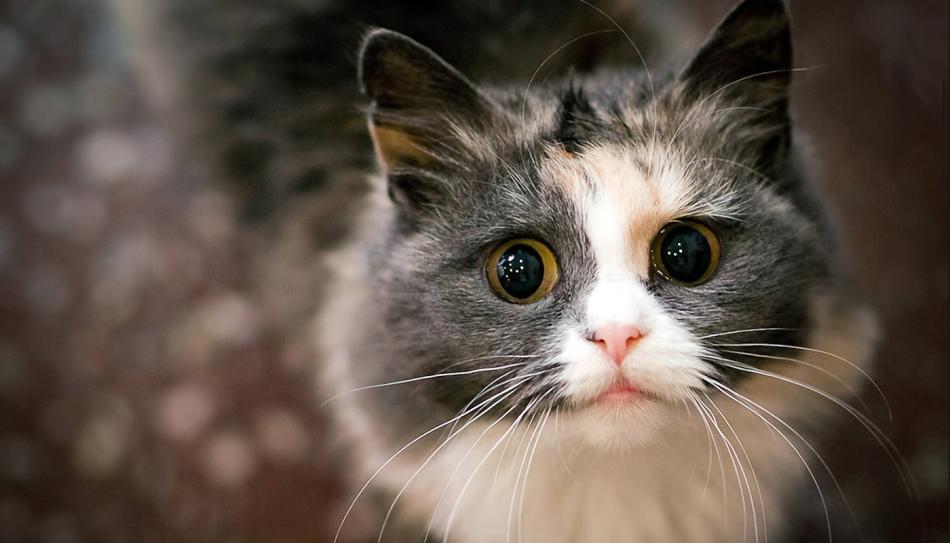 Примета кот вошел в дом