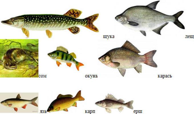 картинки рыба речная