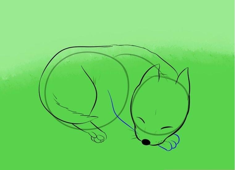 Поэтапное рисование спящей собаки: набросок — шаг 5