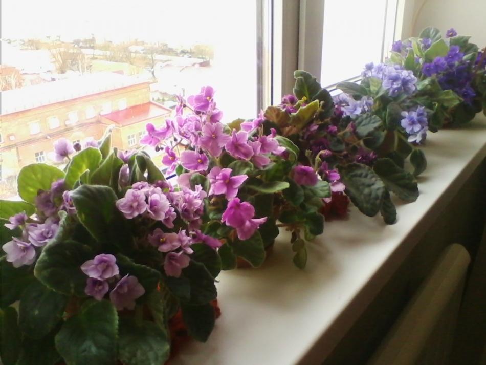 Комнатные цветы которые любят холод фото