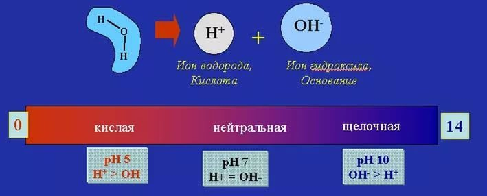 a description of phosphates which may be created by substituting some or all of the hydrogen of a ph