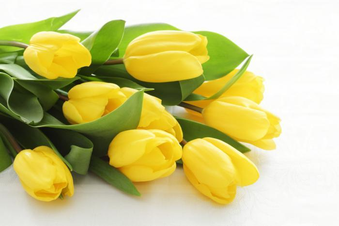 Желтые тюльпаны цветов