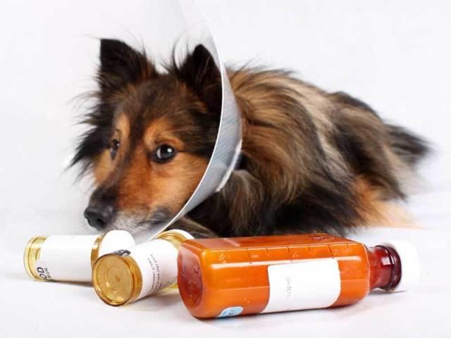 локтевого и коленного сустава у собак. Как вылечить бурсит у ...