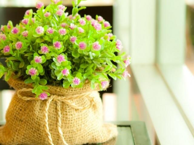 Заказать семена цветов через интернет какой коньяк купить в подарок женщине
