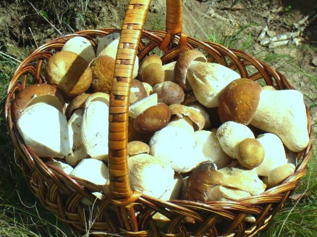 можно ли варить грибы в алюминиевой кастрюле