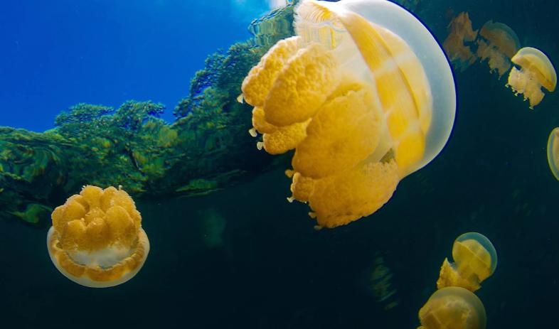 Штиль и шторм предвещают медузы