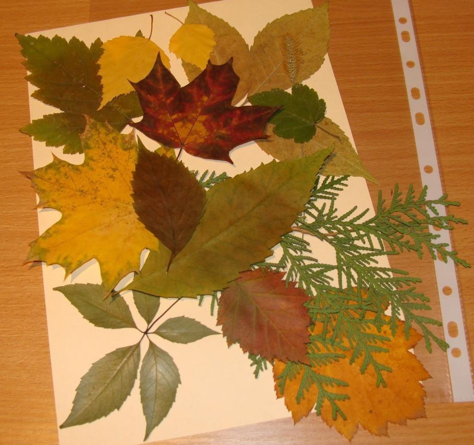 Осенние поделки своими руками для школы и детского сада из 67