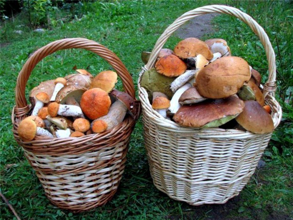 как долго можно хранить грибы после сбора