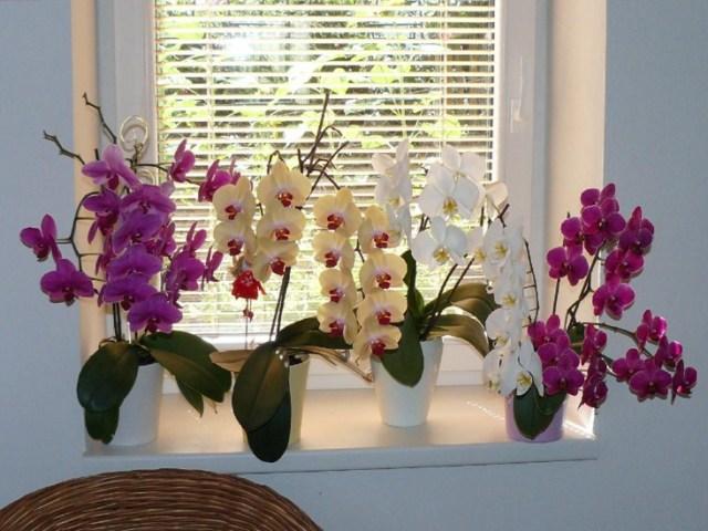 Как поливать летом орхидею