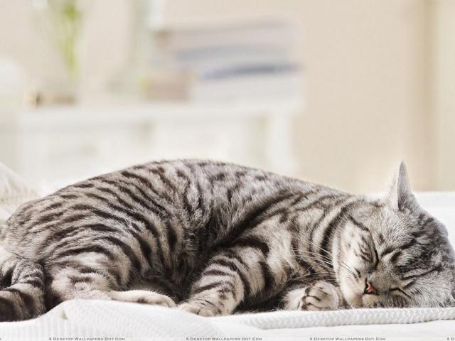Можно ли беременной спать с котом