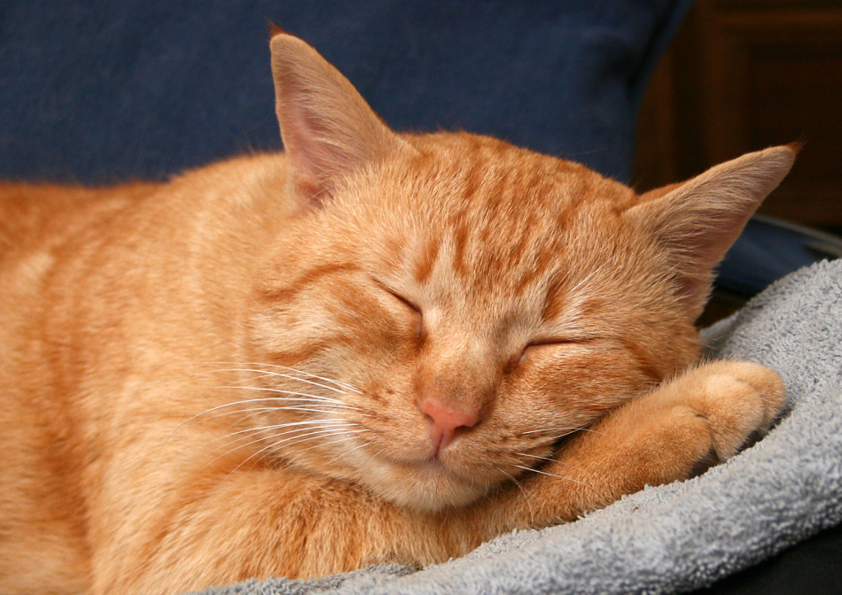Если рыжий кот сам прибился к дому