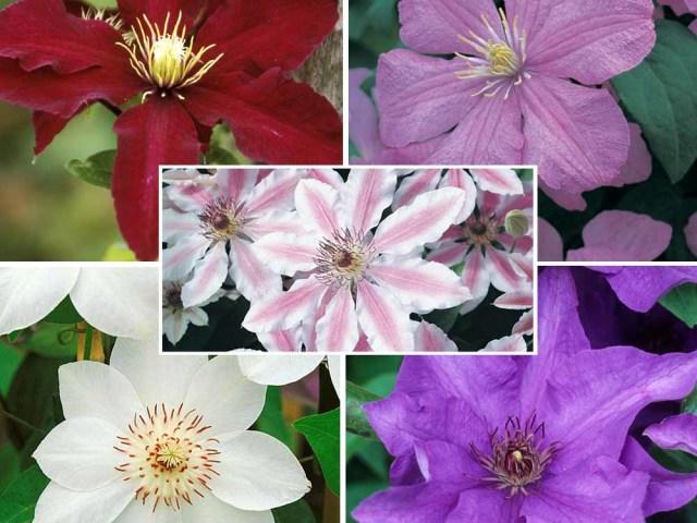 оформление лоджий фото цветами