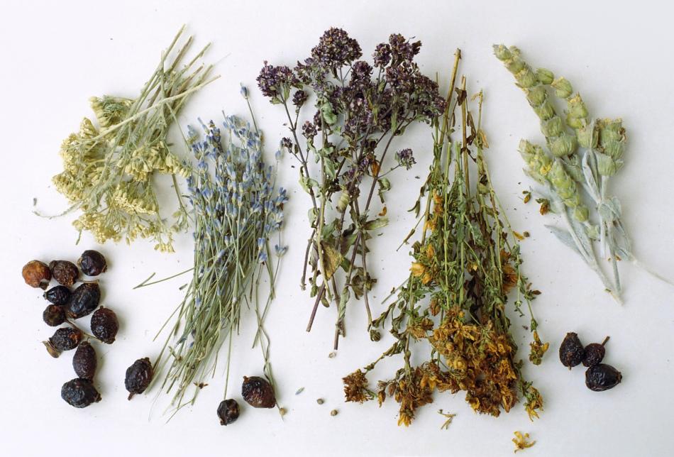 Сборы для похудения алтайских трав
