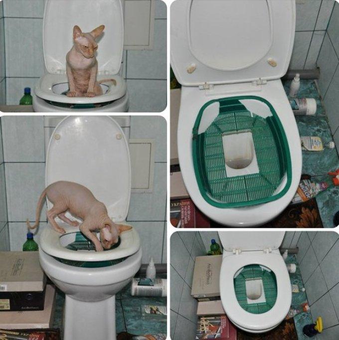 Как приучить кошку к унитазу? Система приучения кошек к унитазу