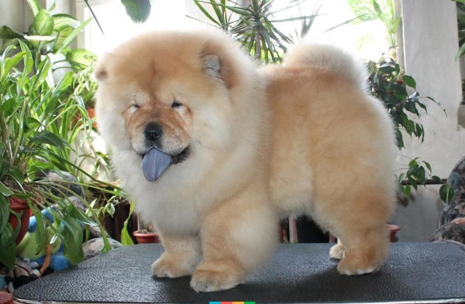 модные породы собак с фотографиями и названиями