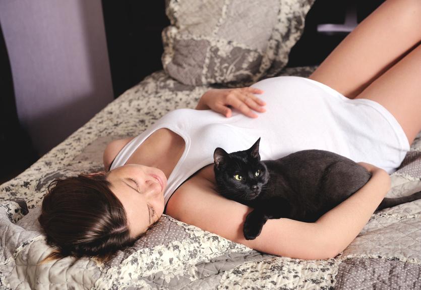 Контакт кошек и беременность