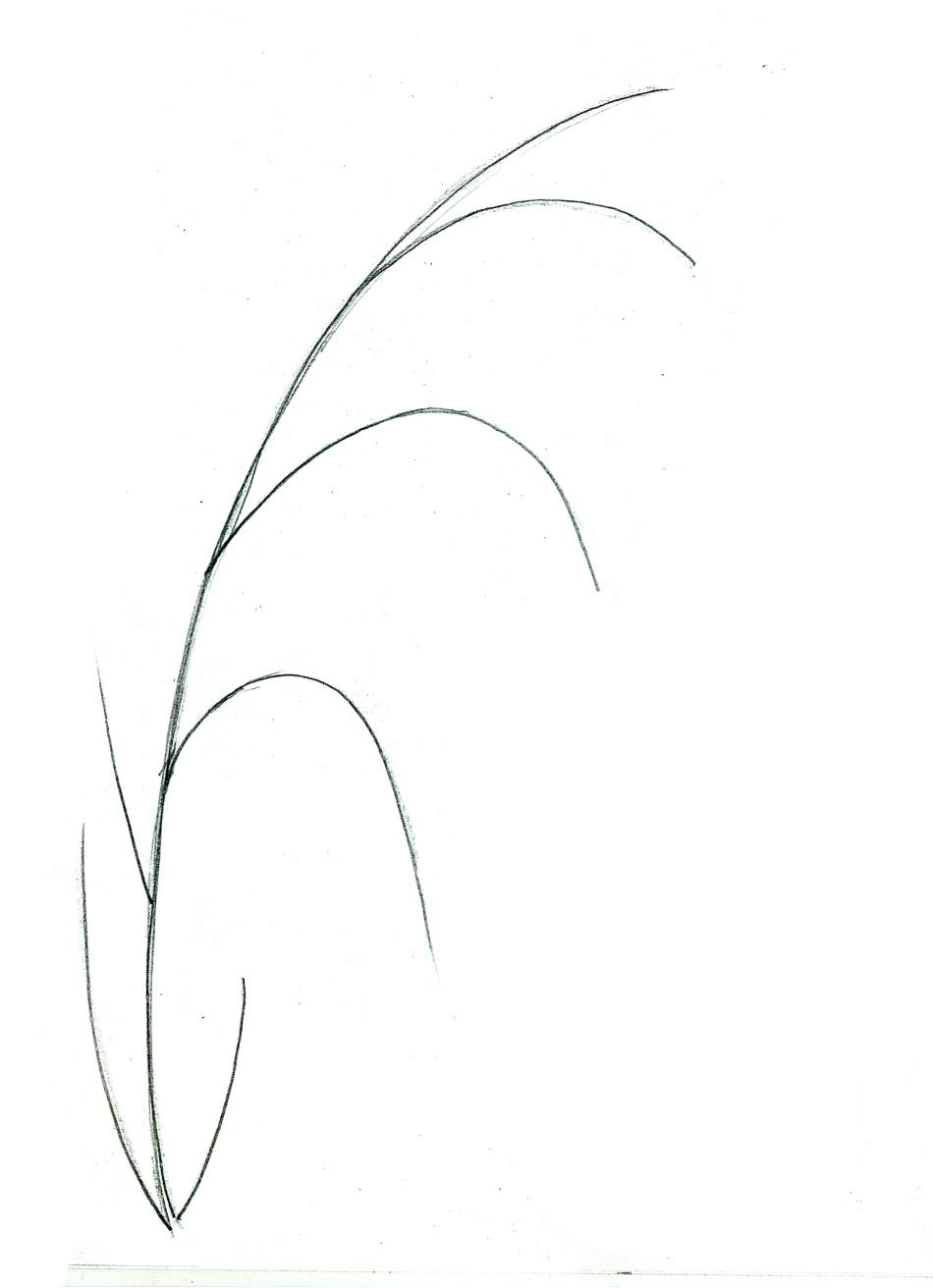 Рисунок колокольчик цветок карандашом