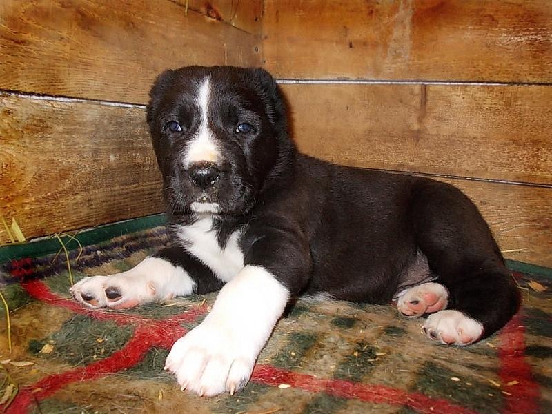 Содержание в непригодных условиях - одна из причин рахита у собак