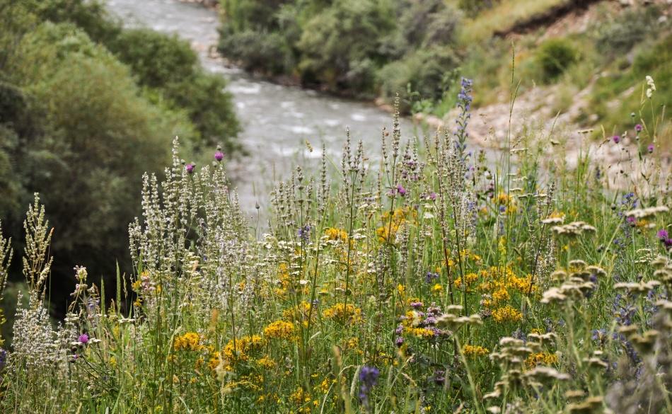 Разнотравье на берегу реки