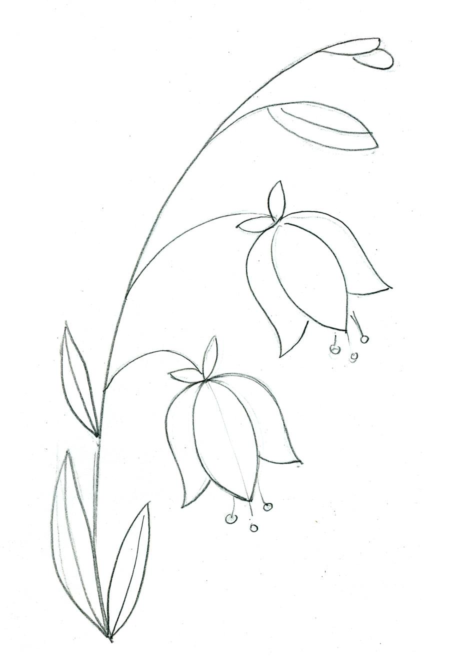 Рисунок в карандаше цветка колокольчика