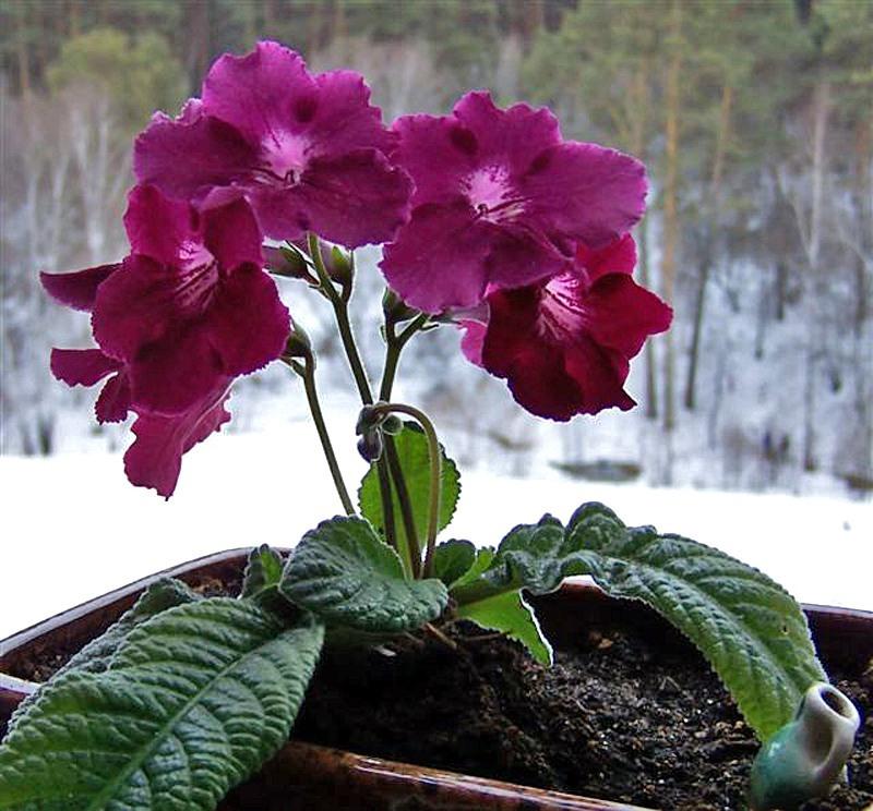 Цветы в вазонах и кашпо на даче фото