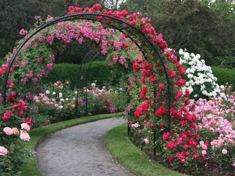 Своими руками арка для роз