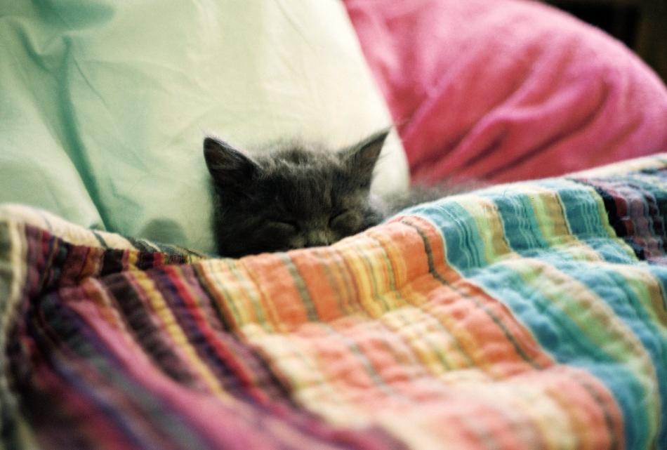 сонник шелковая постель
