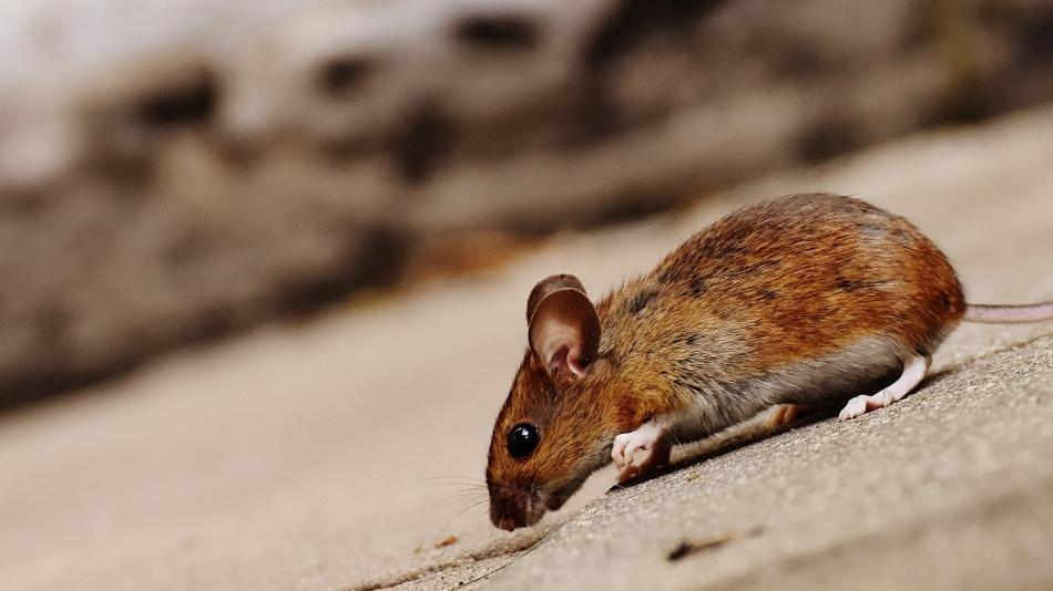 Наступить на мышь примета
