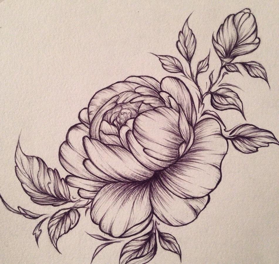 Роза флорибунда Купить кустовые розы Каталог саженцев фото
