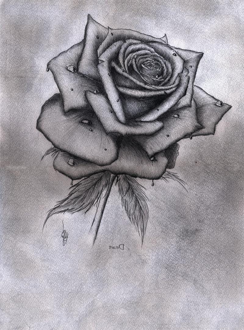 Роза простым карандашом
