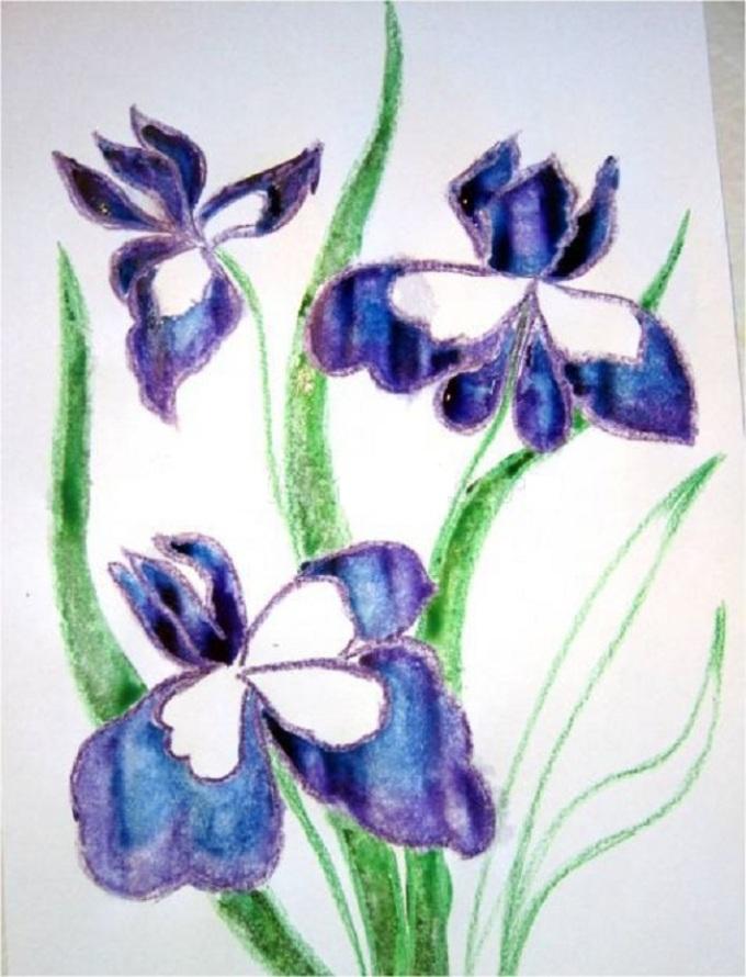 Цветок рисунок ириса