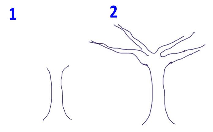 Комнатные растения фото и названия драцена размножение